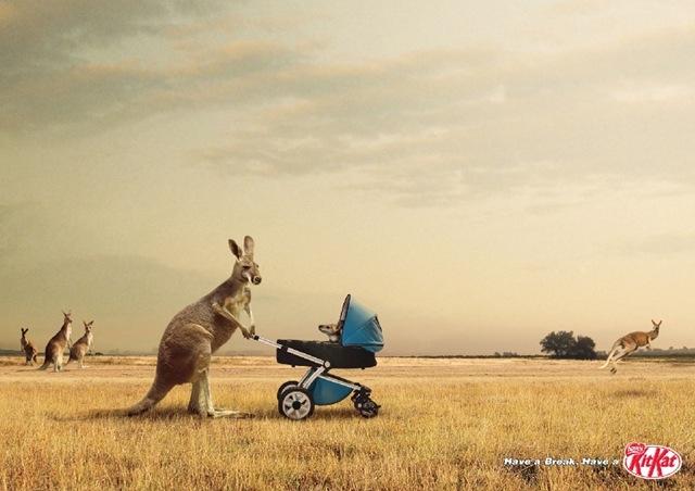 kitkat_kangourou